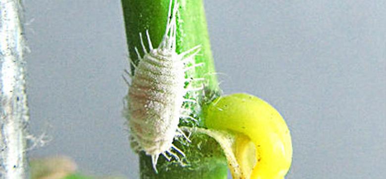 Como curar um fungo da duração de pregos de respostas de medicina
